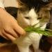 猫草と慢性腎不全について考えてみる