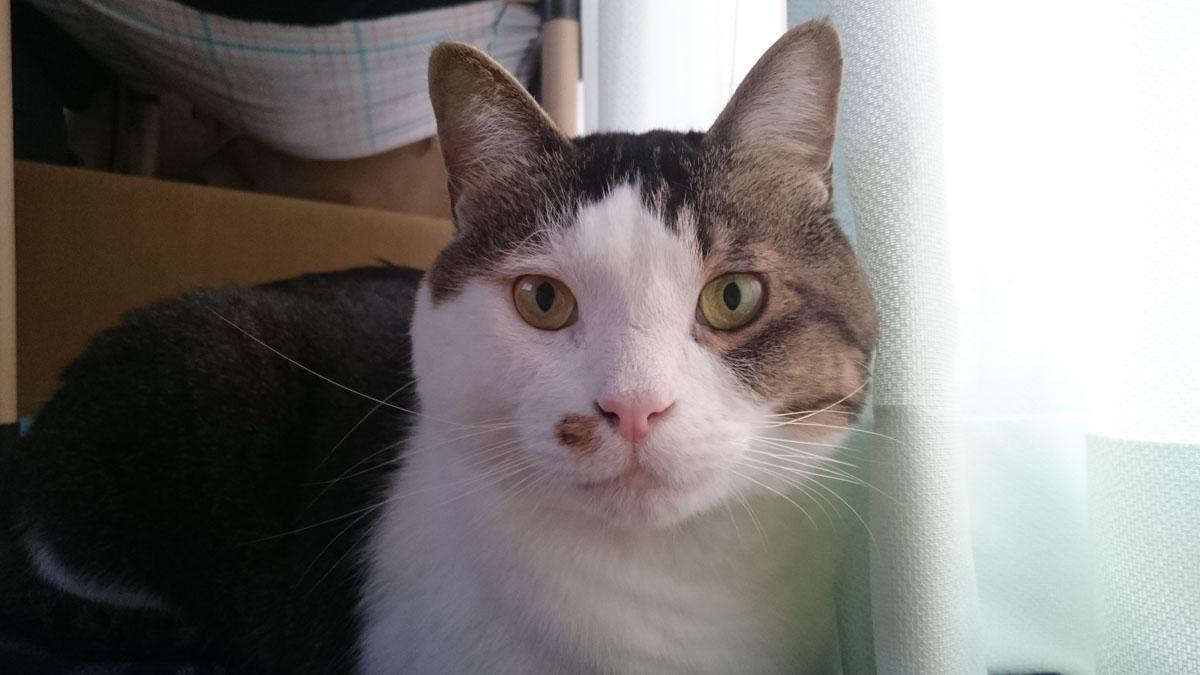 キドニー ケア 猫