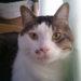 ドクターズケア 猫用 キドニーケア フィッシュテイスト